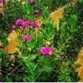 Сітка шпалерна для квітів
