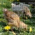 Сітка для огородження домашньої птиці