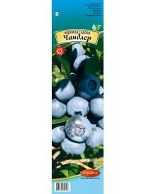 Чорниця садова Чандлер (Capers)
