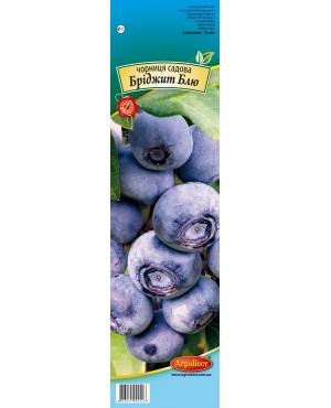 Чорниця садова Бріджит Блю (CAPERS)