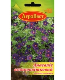 Анагалис крупноцветковый