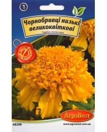 Чорнобривці низькі великоквіткові