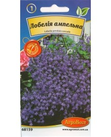 Лобелія ампельна блакитна
