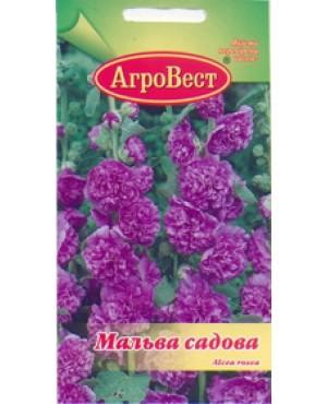 Мальва садова фіолетова