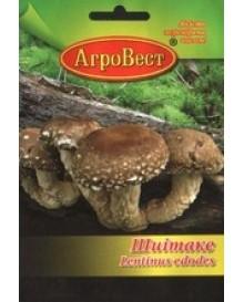 Міцелій грибів Шиітаке