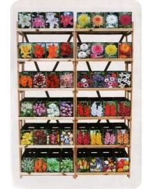 Каталог цибулькових квітів