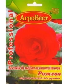 Бегонія бульбова великоквіткова Рожева