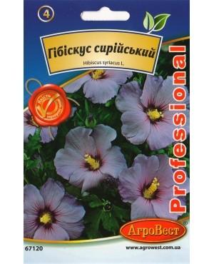 Гібіскус сирійський (гібіскус садовий деревовидний)