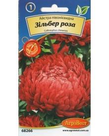Айстра пионовидная Зильбер роза
