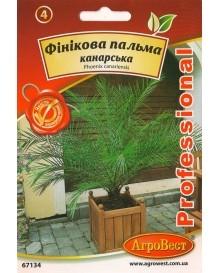 Фінікова пальма канарська