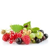 Плодово-ягідні саджанці